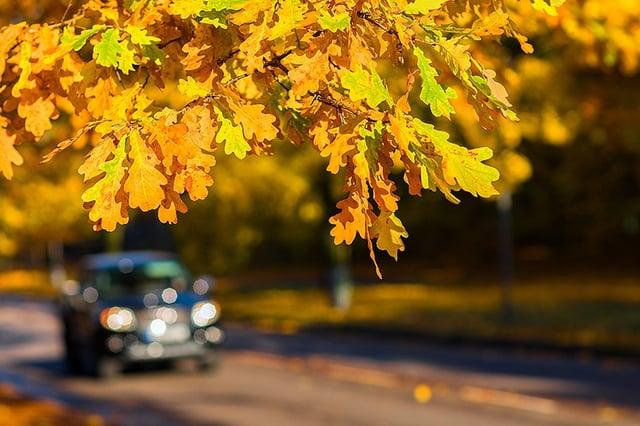 Truck in fall