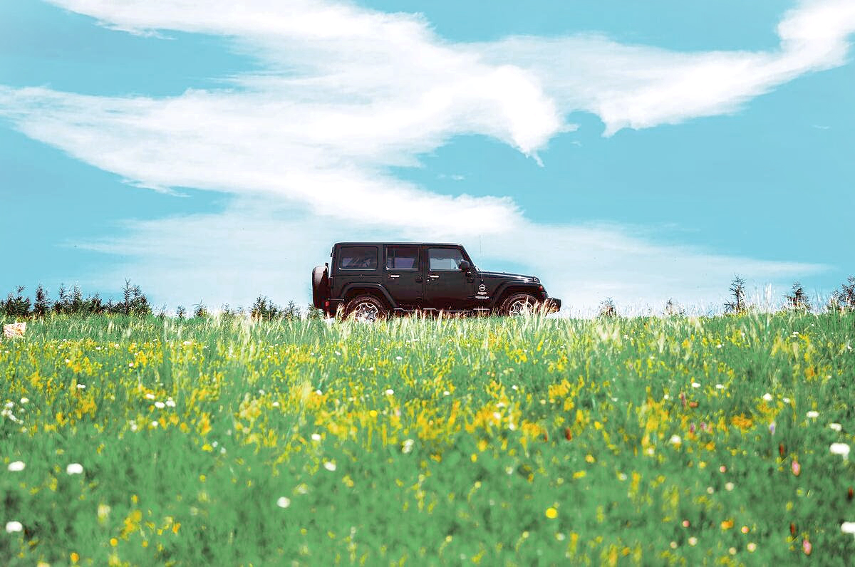jeep in a field of flowers