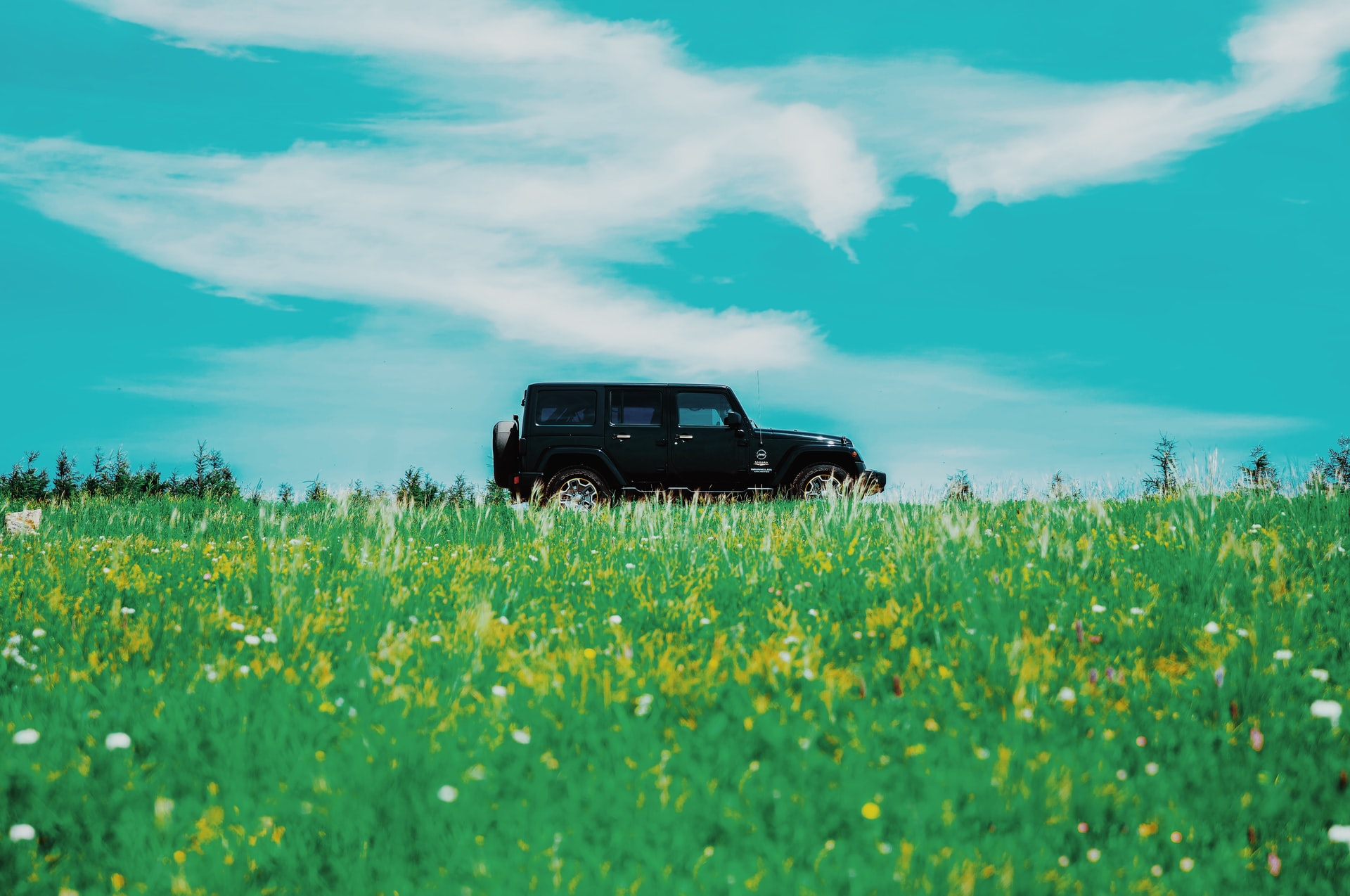 jeep in a field of flowers
